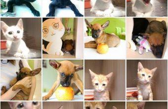 幸福。好食。咖啡HOMECAFE@推廣領養不棄養的寵物認養餐廳 有好咖啡 有好餐 還有對動物滿滿的愛