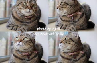 [台中]Dream cats cafe夢想貓咖啡--可愛的三隻貓貓,萌萌噠。也有貓咪寄宿唷!