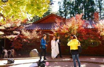 福壽山農場,深秋賞楓,欣賞黃、綠、紅三色交疊之美。