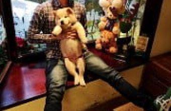 【熱血採訪】寵物友善餐廳《故事咖啡館》有超萌鬆獅犬駐店,還可享受被熊熊包圍的感覺喔!