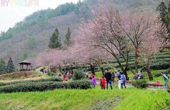 武陵農場2天一夜規劃行程看這裡!旅行最美的風景是人,武陵櫻花季交通管制到2月底哦!