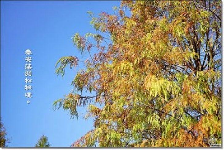 2017 01 25 011734 728x0 - 『台中。后里』 泰安落羽松林秘境-泰安國小旁/泰安櫻花派出所/冬日限定的那一季松紅。