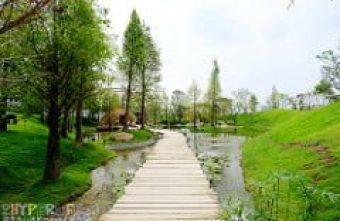 惠宇祕境│森青自然共生-台中市區內就可以遇見的湖畔小森林,就在龍富夜市附近哦!