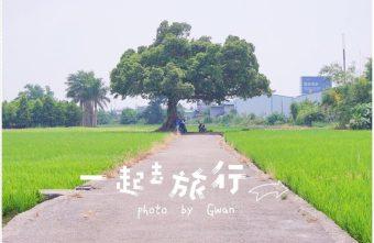 2017 09 10 223233 340x221 - 真的不是在台東,這裡也有金城武樹!!
