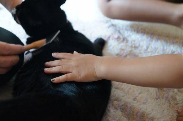 2017 10 30 161149 - 台中寵物美容推薦│東勢區寵物美容攻略懶人包