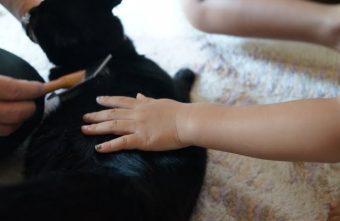 台中寵物美容推薦│南屯區寵物美容攻略懶人包