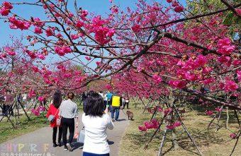 2018 02 18 225817 340x221 - 后里崴立機電│工廠內也有百棵櫻花樹的櫻花公園!紅白粉三種色系櫻花一次滿足~