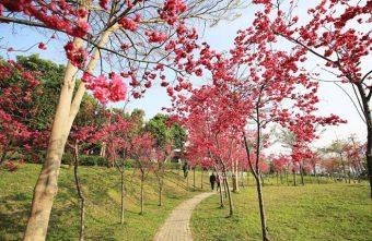 2018 02 24 134649 340x221 - 東勢河濱公園-對面小公園櫻花盛開