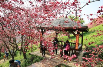 2018 02 24 134926 340x221 - 沐心泉休閒農場-來沐心泉被滿滿的盛開櫻花包圍吧