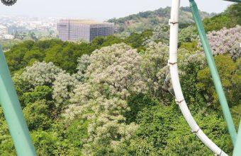 鰲峰玉帶,清水景觀橋賞苦楝花,旁邊還有大草皮可以野餐~