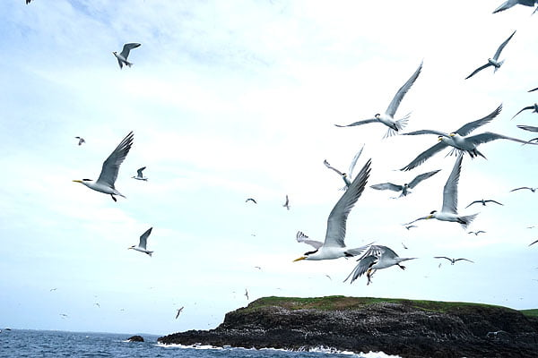 澎湖旅遊│白灣坑休閒半日遊 雞善嶼燕鷗餵食秀要小心天外飛來的炸彈