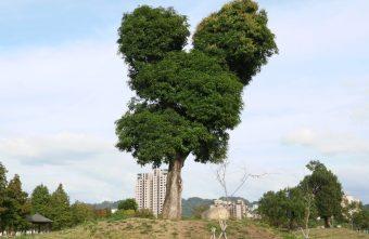 2018 12 04 185713 340x221 - 超可愛米奇樹就在台中萬坪公園,還有美麗的落羽松步道~