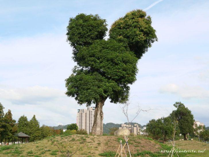 2018 12 04 185713 728x0 - 超可愛米奇樹就在台中萬坪公園,還有美麗的落羽松步道~