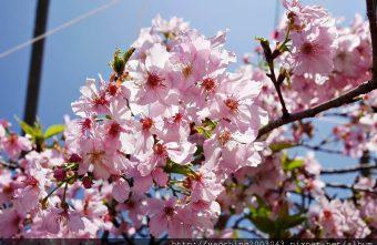 2019 03 05 095731 340x221 - 台中烏日 溪尾櫻花林,櫻花季開跑囉,一同感受免費的粉色浪漫