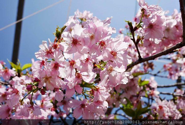 2019 03 05 095731 728x0 - 台中烏日 溪尾櫻花林,櫻花季開跑囉,一同感受免費的粉色浪漫