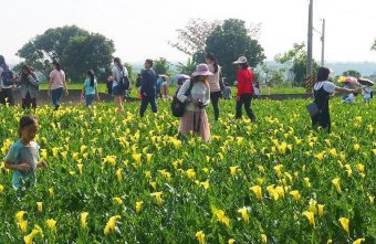 2019 04 17 230341 340x221 - 外埔海芋田,黃澄澄花海,可走進去擁抱黃色海芋,花期到4月底~