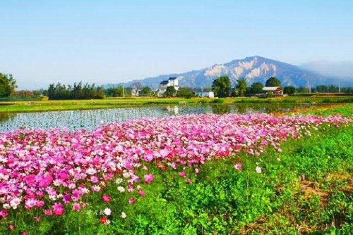 2019 06 17 212159 728x0 - 台中景點|后里安眉路邊美景~波斯菊映襯下的火炎山 彷彿迷你版日本富士山