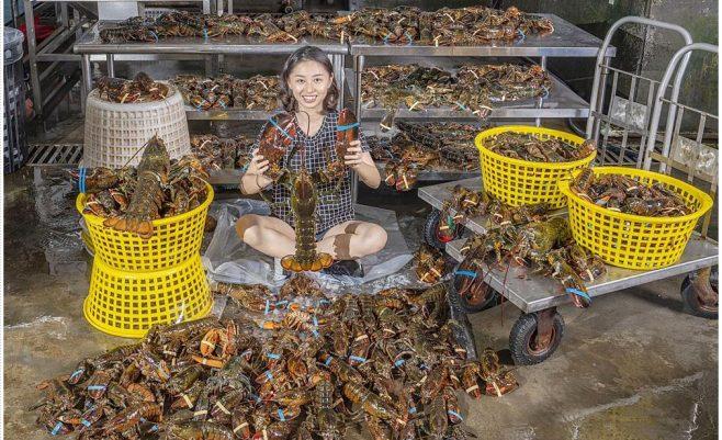 2020 06 03 191139 658x401 - 熱血採訪│六月龍蝦價格大崩盤!台中最便宜的龍蝦套餐就在菁選涮涮鍋